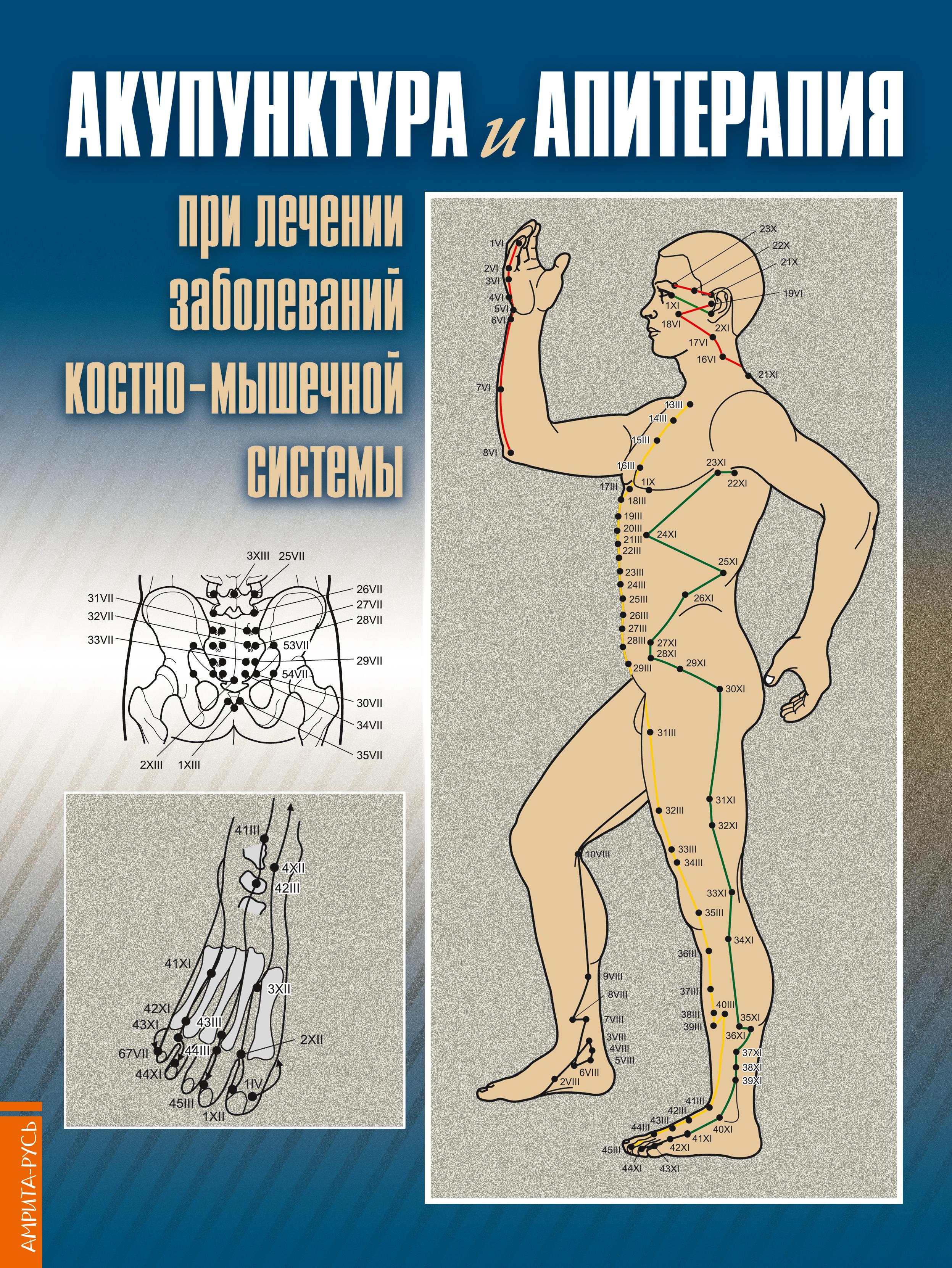 Акупунктура и апитерапия при лечении заболеваний костно-мышечной системы. 2-е изд. Практ. рук-во